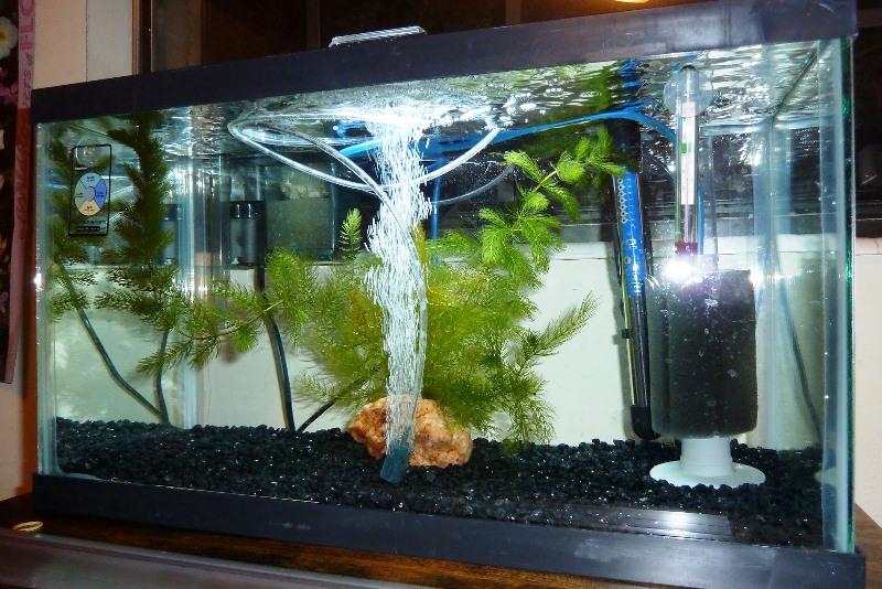 Навіщо потрібен акваріум?