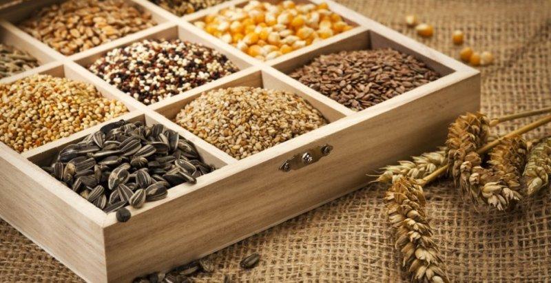 Где купить семена?
