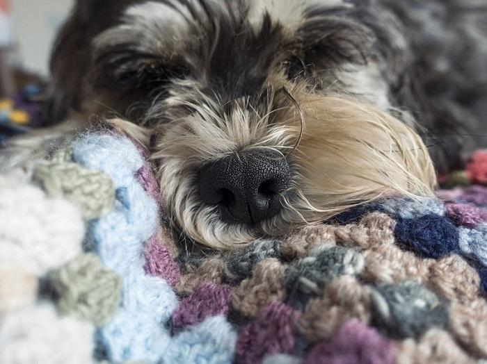 Уход за шерстью собаки: что может пойти не так?