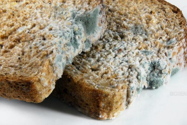 Чому хліб швидко пліснявіє: виправляємо помилки зберігання