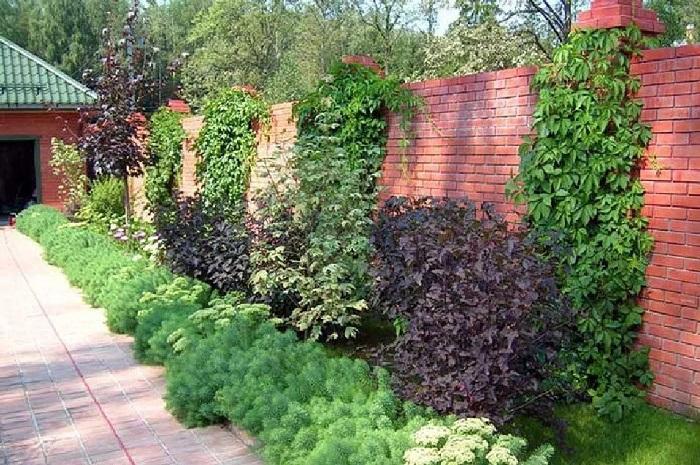 Які дерева посадити уздовж забору, щоб закритися від сусідів, поради експертів