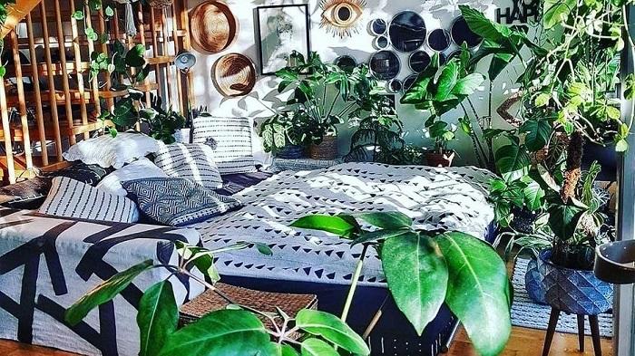 Як на курорті: 5 рослин, які створять в будинку атмосферу відпустки