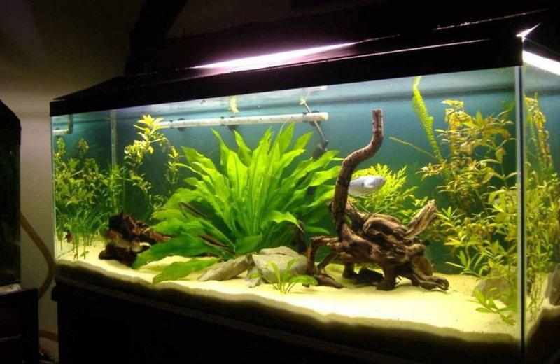 Что может понадобиться для очистки домашнего аквариума?